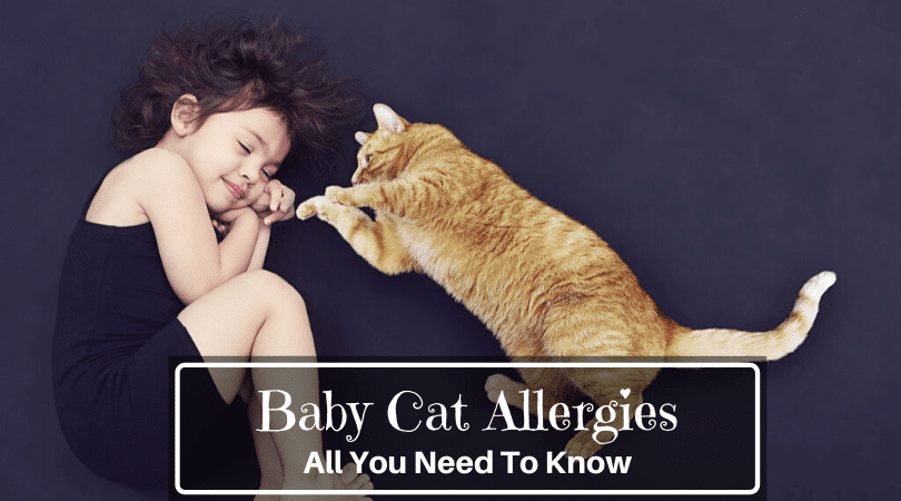 Baby Cat Allergies
