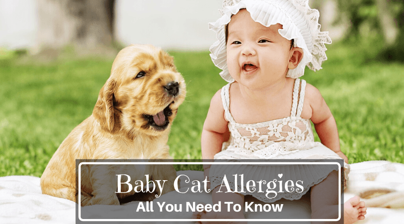 Baby Dog Allergies